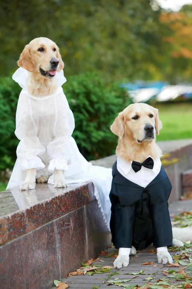 大切な愛犬に♡結婚式にぴったりなドレスアップをする7つのアイデア で紹介している画像